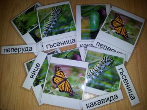 Монтесори карти с жизнен цикъл на пеперуда